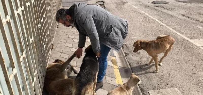 Uyuz ve hasta köpekler tedavi edilip yaşam alanlarına bırakılacak