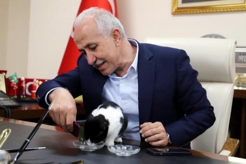 Bir kedisever Başkan Gültak, engelli kedi makamında ağırladı