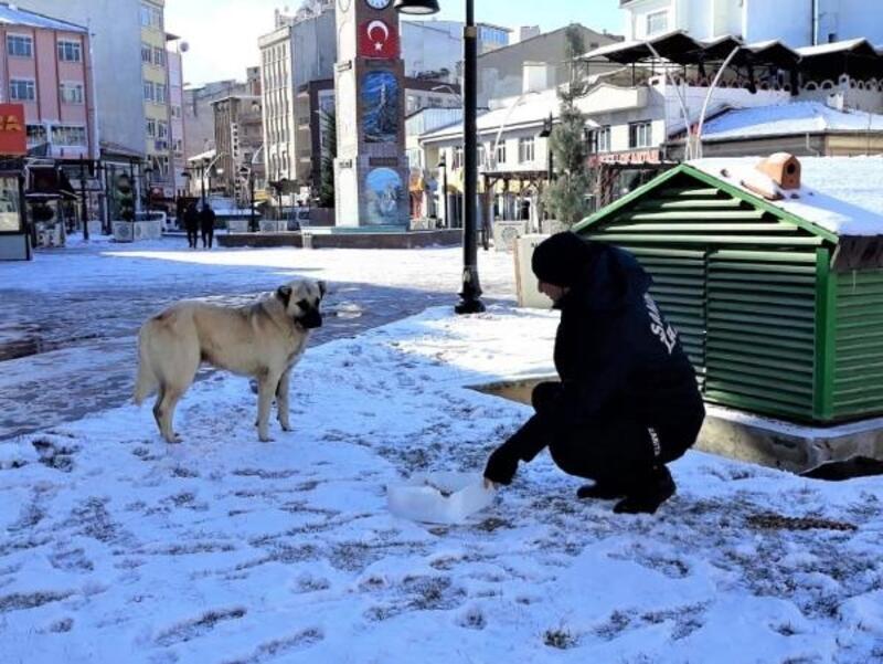 Sandıklı'da sokak hayvanları için yem bırakıldı