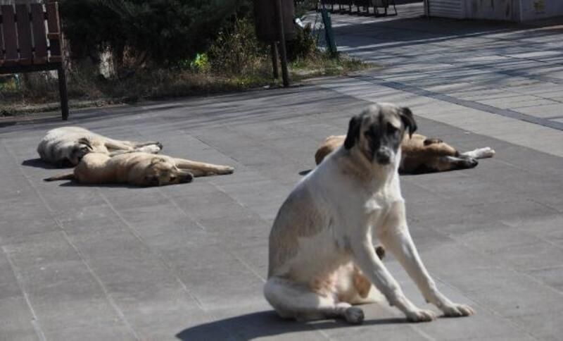 İslahiye'de meydanlar köpek ve kuşlara kaldı