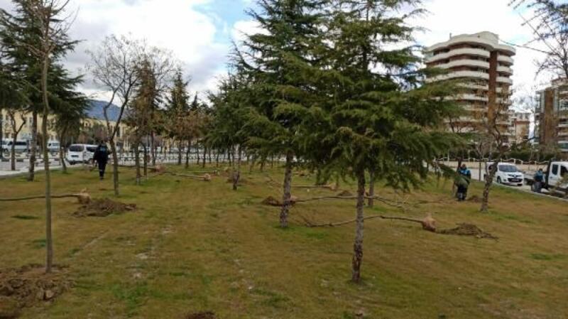 Manisa'da ağaçlandırma seferberliği