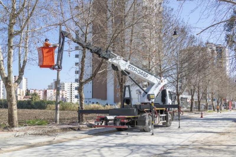 Büyükşehir'den ağaçlara bahar bakımı