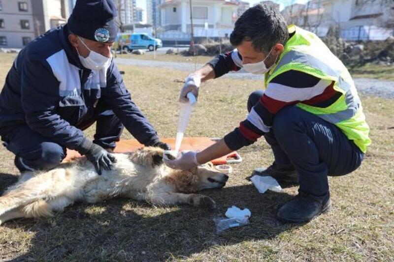 Yaralı köpeklerin yardımına 'Pati Kurtaran' yetişiyor