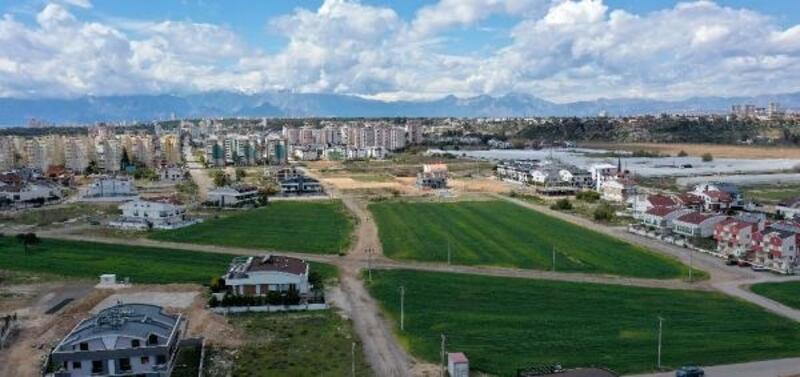 Muratpaşa, 20 ton buğday hasat edecek