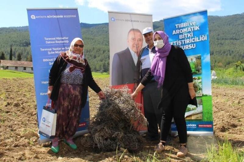 Manavgat'ta 3 bin lavanta fidesi dağıtıldı