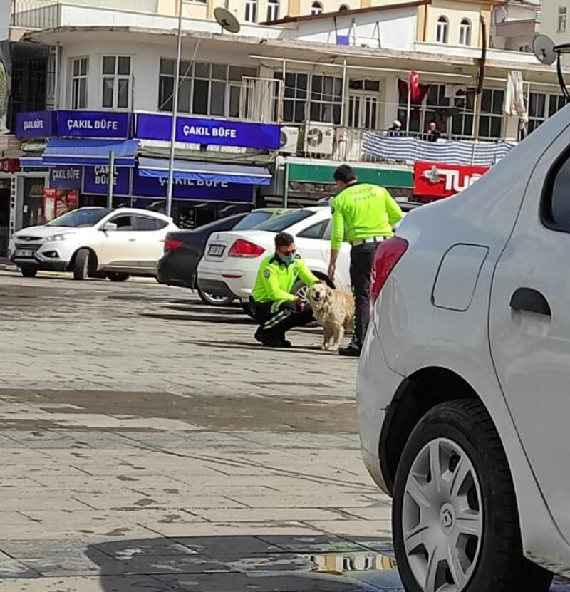 Polisten sokak köpeğine şefkat