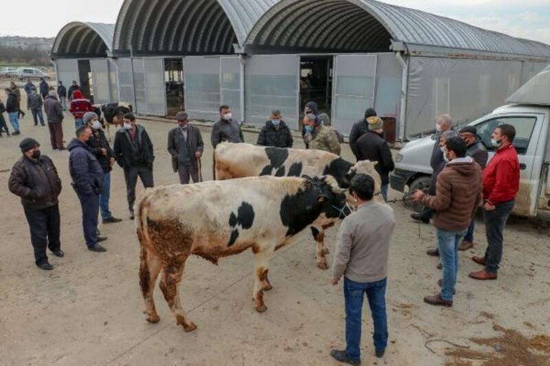 Keşan'da canlı hayvan pazarı yeniden açılacak