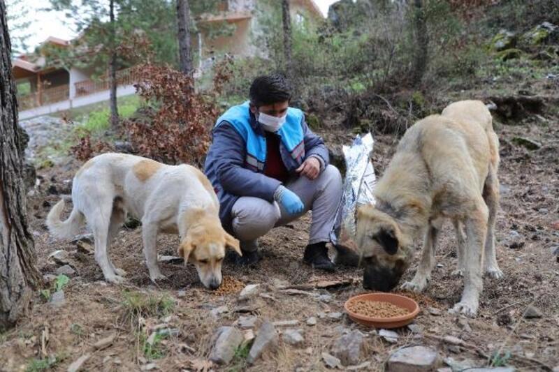 Sokak hayvanları güvende