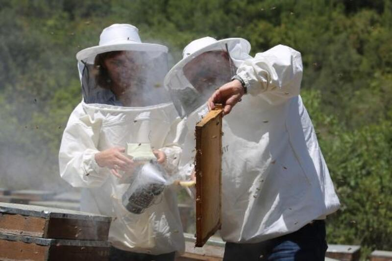 Mersin'de yılın ilk bal ve polen hasadı yapıldı