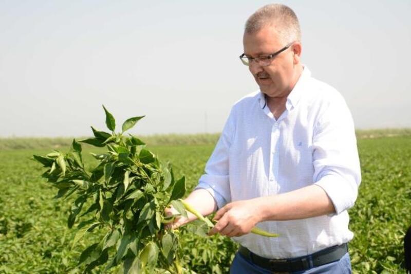 Karacabey Belediye Başkanı Özkan: Karacabey, tohumculuğun merkezi olacak