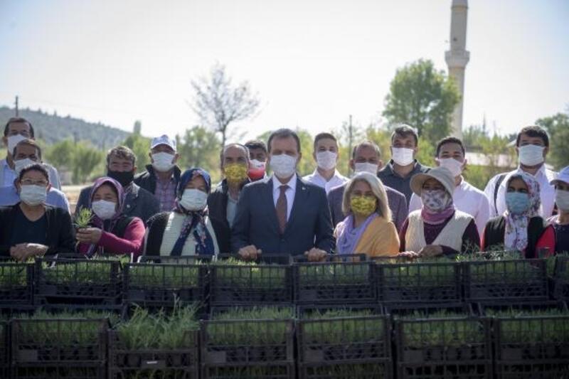 Büyükşehir, Silifkeli üreticilere 40 bin lavanta fidesi ve 990 alıç fidanı dağıttı