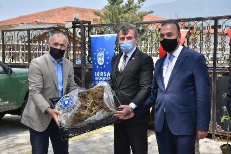 Bursa Büyükşehir Belediyesi'nden çiftçilere fidan desteği