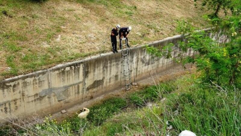 İtfaiyenin kanaldan kurtarmak istediği köpek, kaçarak uzaklaştı