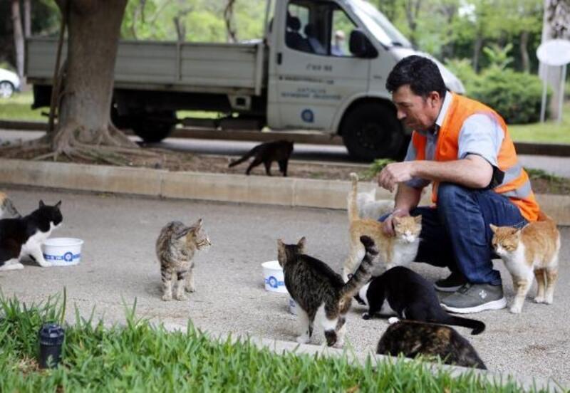Büyükşehir Belediyesi tam kapanmada sokak hayvanlarını unutmadı