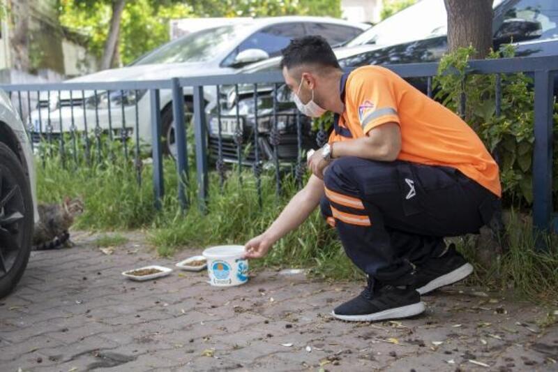 Büyükşehir, sokak hayvanlarına mama ulaştırıyor