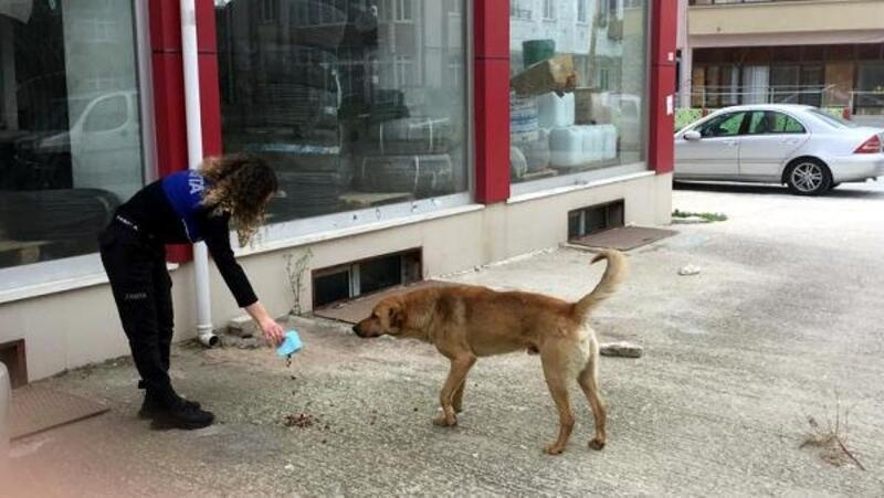 Saray'da sokak hayvanlarını zabıta besledi