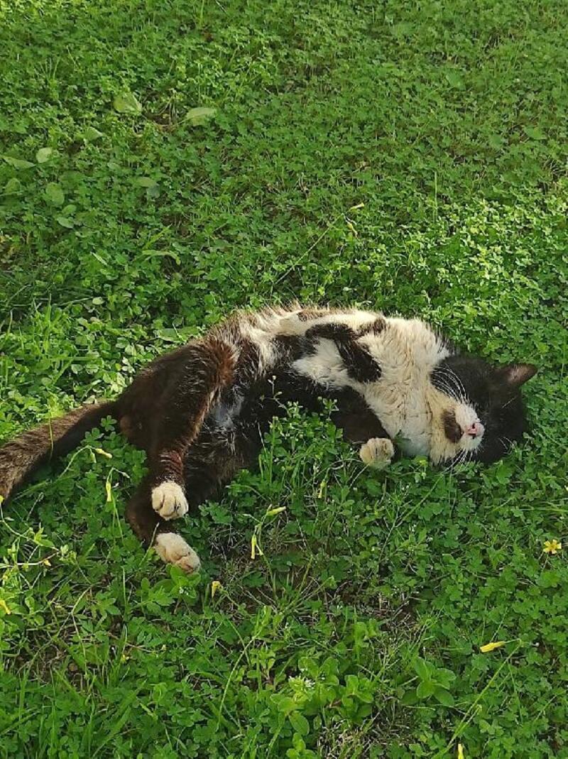 Hasta kedi tedaviye alındı