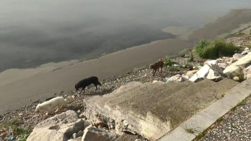 İznik sahili sokak hayvanlarına kaldı