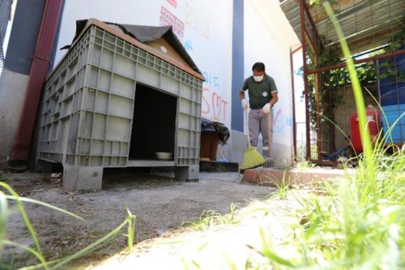 Mezitli Belediyesi'nden sokak hayvanları için özel çalışma
