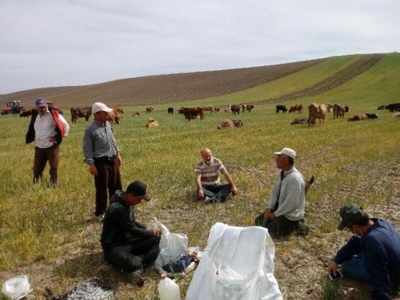Yozgat'ta kuraklık çiftçileri üzdü