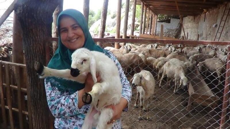 Andırın'da ORKÖY'le hayvancılık gelişiyor