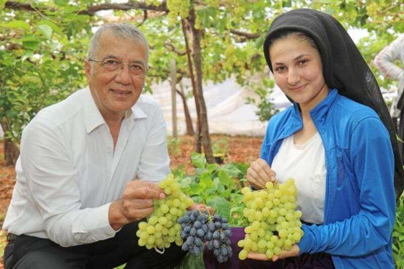 Mezitli'de üzüm hasadı başladı