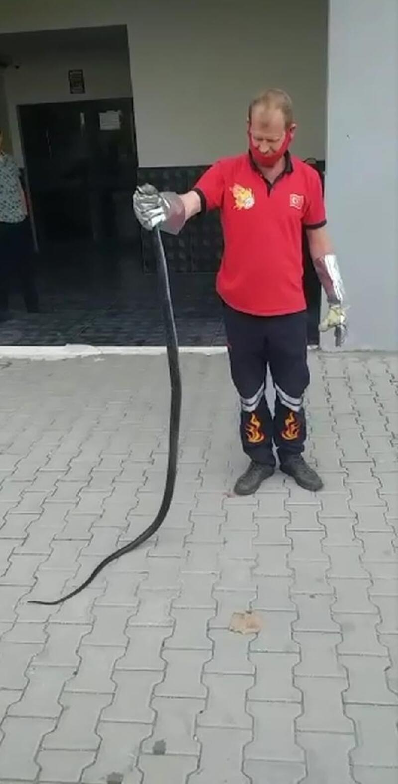 Uzmandan vatandaşlara 'yılan' uyarısı