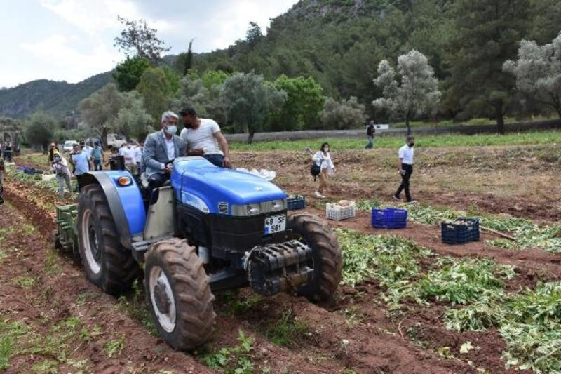 Marmaris'te belediyenin hasadı yaptığı patatesler ihtiyaç sahiplerine dağıtıldı
