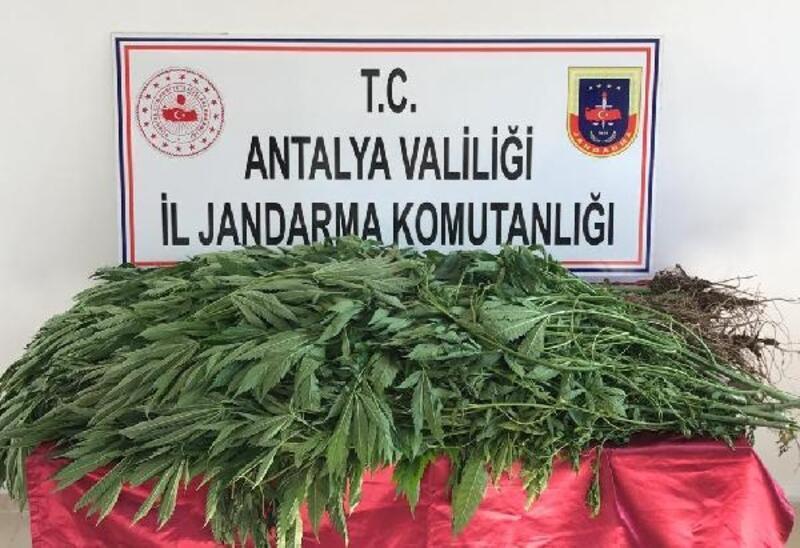 Kumluca'da seraya uyuşturucu baskını