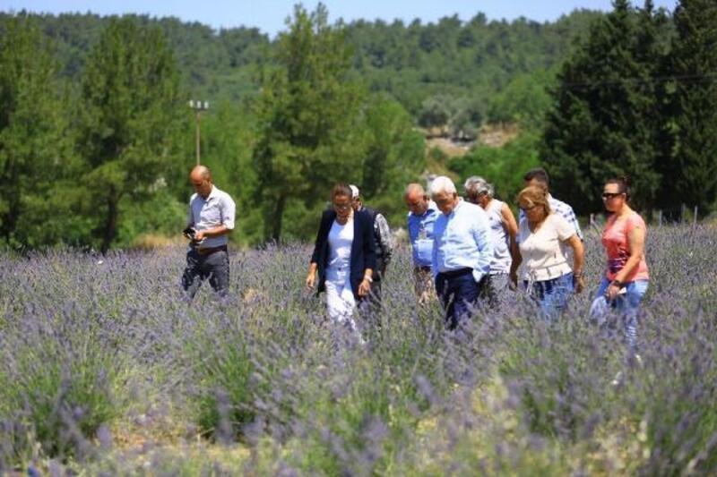 Büyükşehir, Muğla'da 97 bin 599 aromatik bitki dağıttı