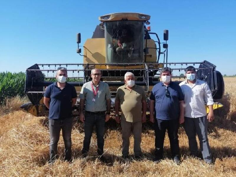 Yerli tohum ekimi yapılan buğday çeşitleri hasat edildi