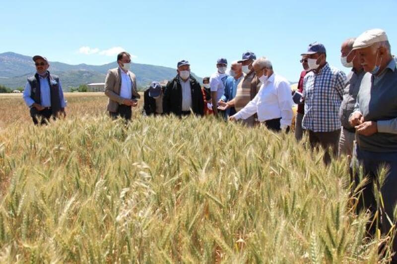 Bucak'ta çiftçilere buğday tanıtımı