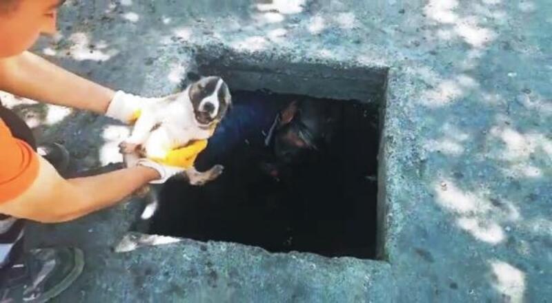 Kanalizasyona düşen yavru köpeği itfaiye ekipleri kurtardı