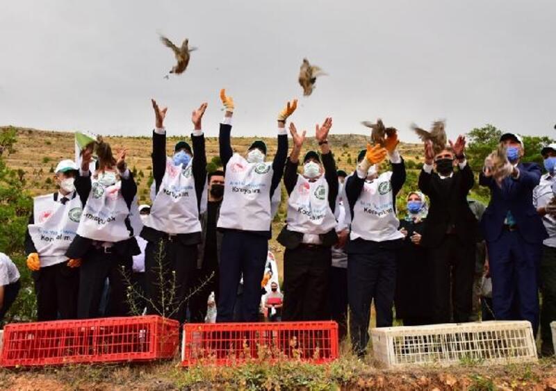 Malatya'da doğaya 30 bin keklik salındı
