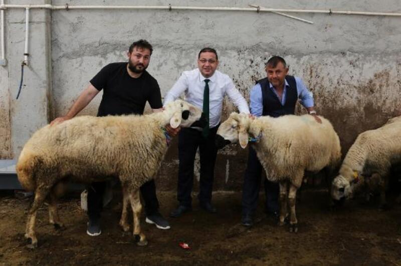 Başkan Eken'den koyun-koç üretim merkezi ziyareti
