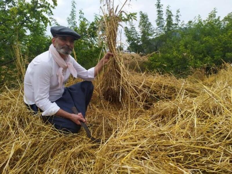 Kunduru buğdayının son hasadını başkan yaptı