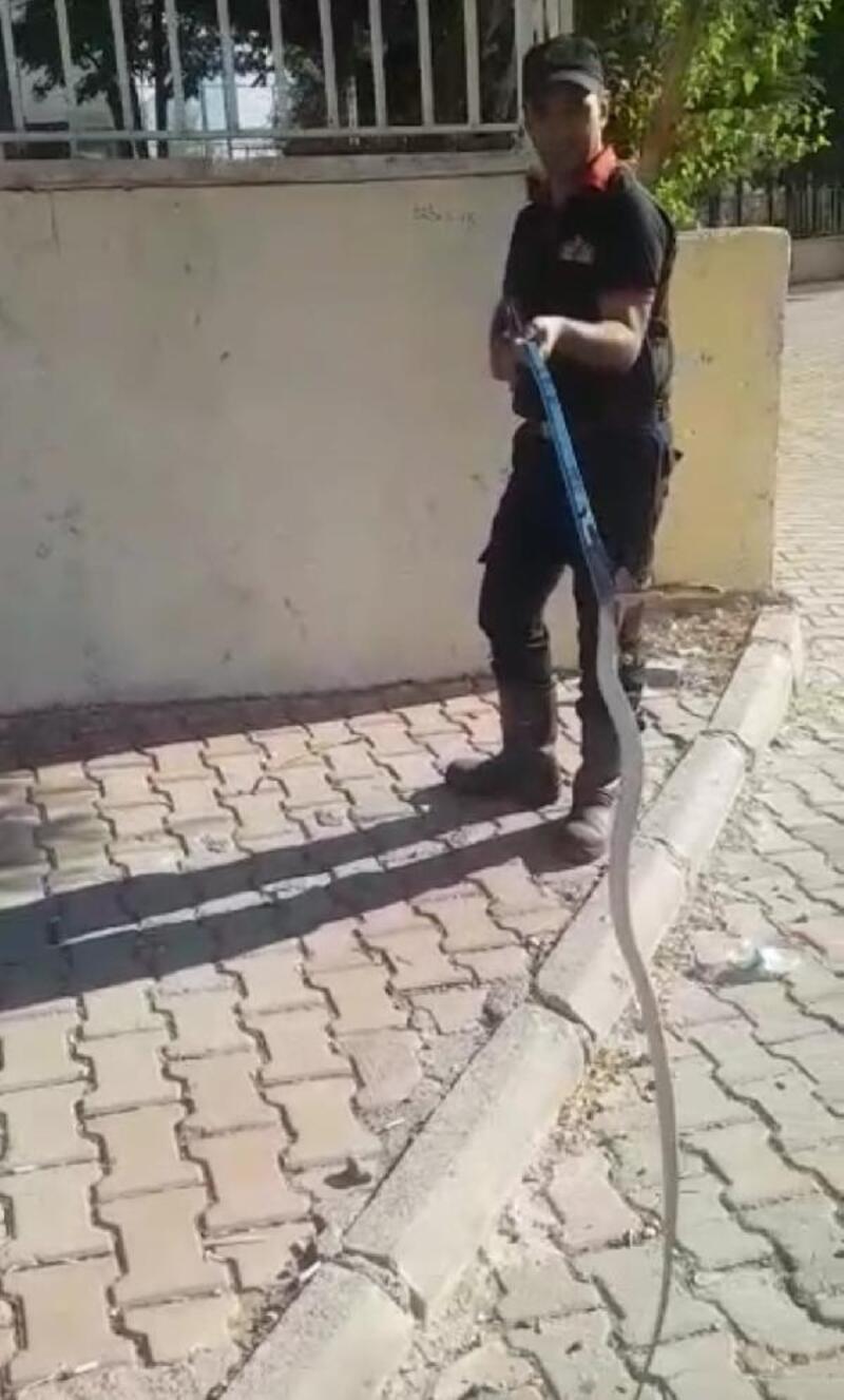 Besni'de okulda yakalanan yılan doğaya bırakıldı