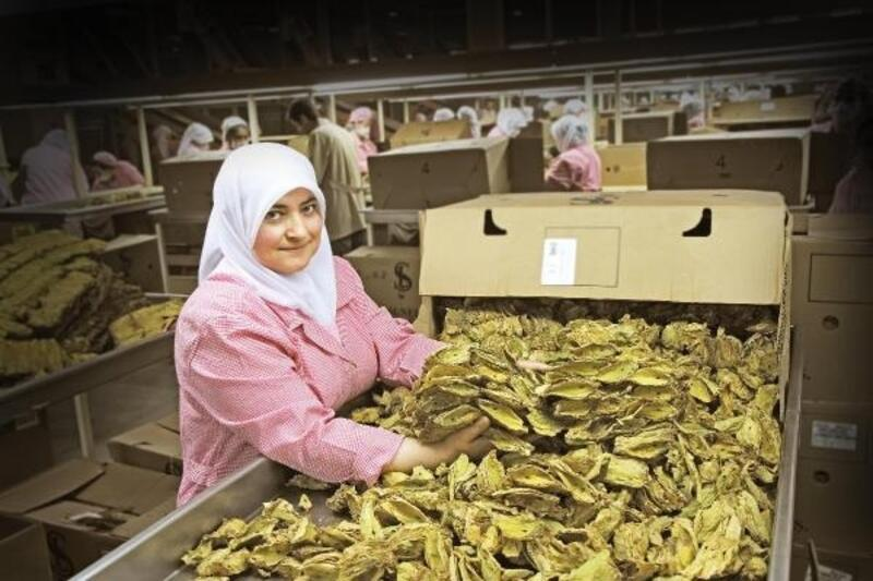 Türkiye, şark tipi tütün üretim ve dış ticaretinde dünya liderliğini koruyor