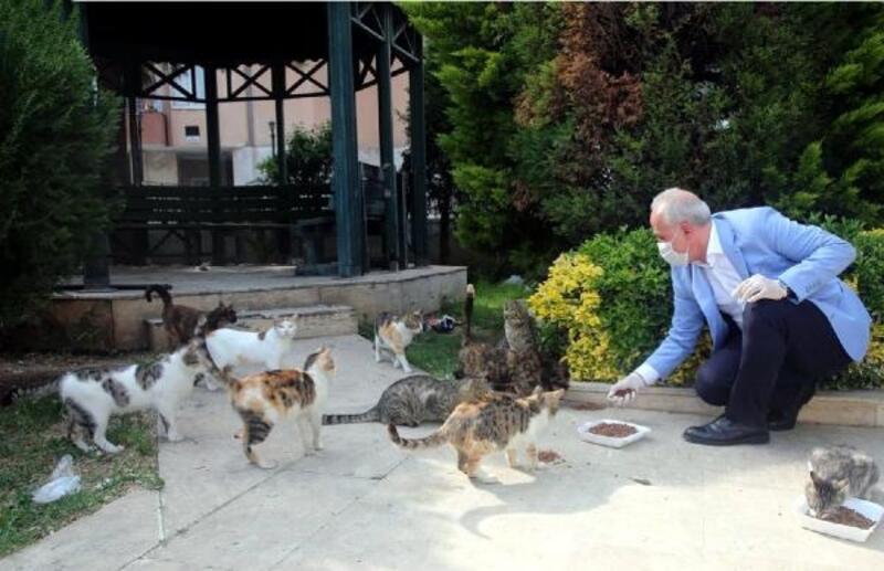 Başkan Gültak'tan sokak hayvanları için çağrı