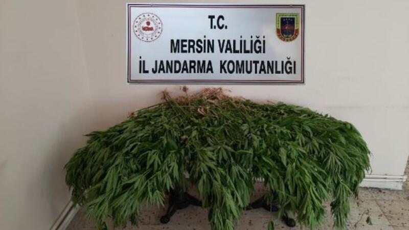 Mersin'de uyuşturucu operasyonu 4 tutuklama