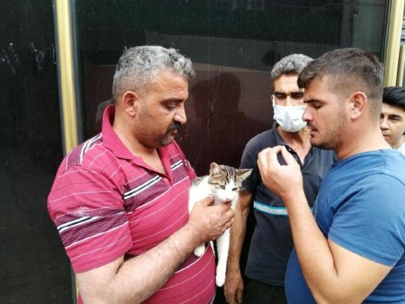 Otomobilin çarptığı kedi, tedaviye alındı