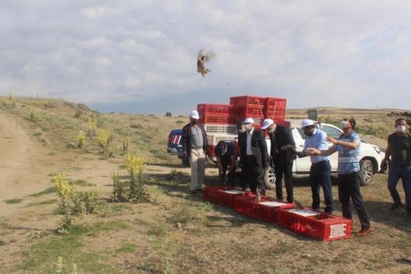 Aksaray'da bin 100 tane keklik doğaya bırakıldı