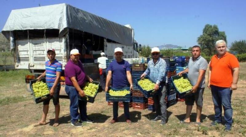 Superior Seedless çeşidi sofralık üzümün ihracat yolculuğu başladı