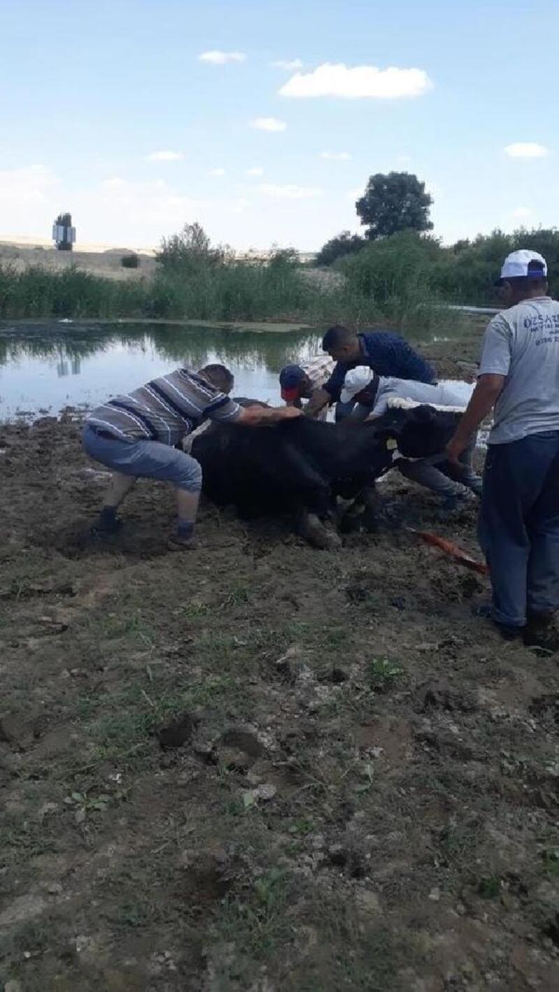 Balçığa saplanan inek kurtarıldı