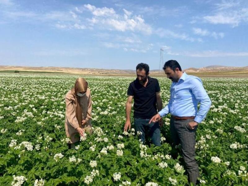 Ziraat Odası Başkanı Çoban: Patates üreticileri destek bekliyor