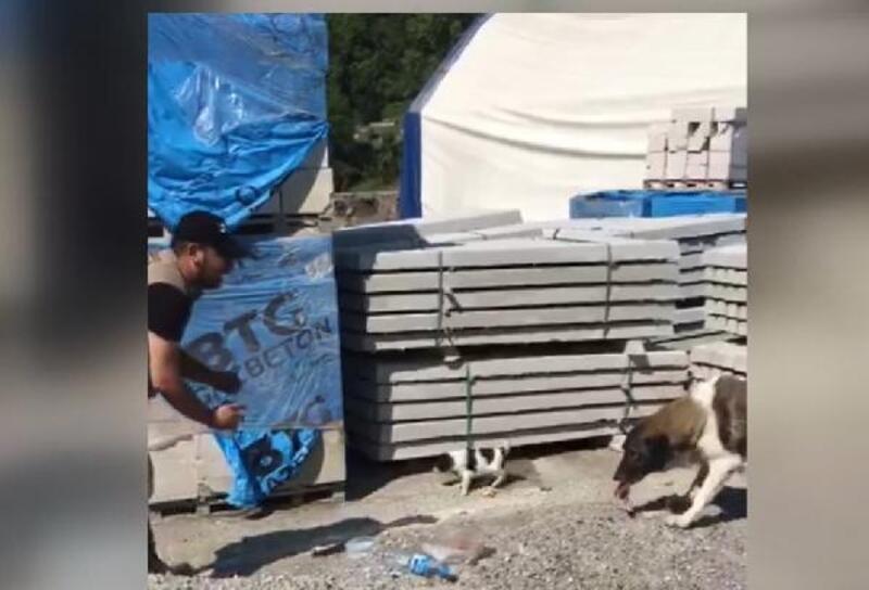 Bozkurt'ta anne köpek ve yavrusunu ekipler besledi