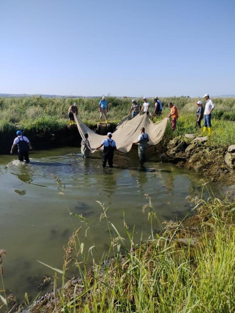 Edirne'de üretilen 1 milyon 70 bin pullu sazan balığı Bursa'ya gönderildi