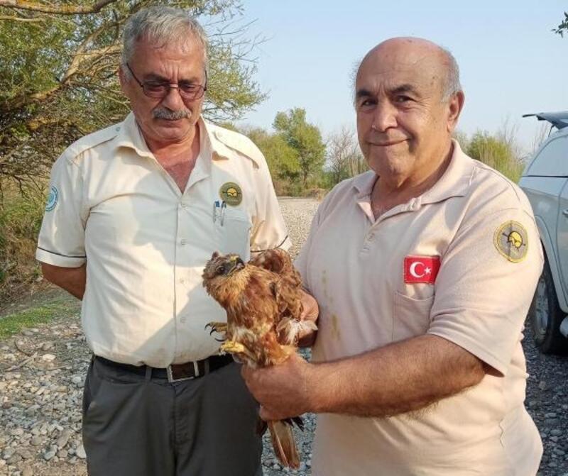 Tedavileri tamamlanan 5 yabani kuş doğaya bırakıldı