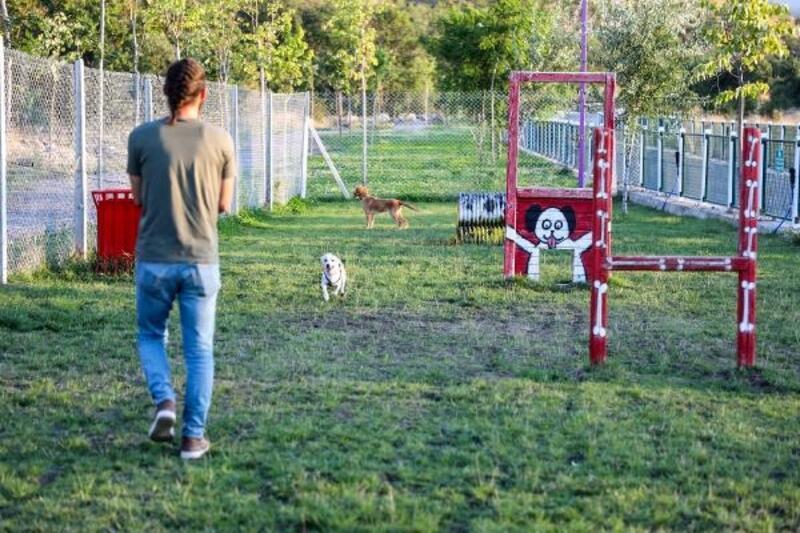 Patiyol, hayvan sahiplerine yürüyüş ortamı sağlıyor