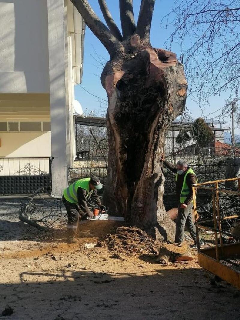 Büyükşehir 2 yılda 120 ağacı kurtardı